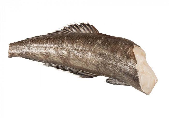Schwarzer Seehecht4-6 kg