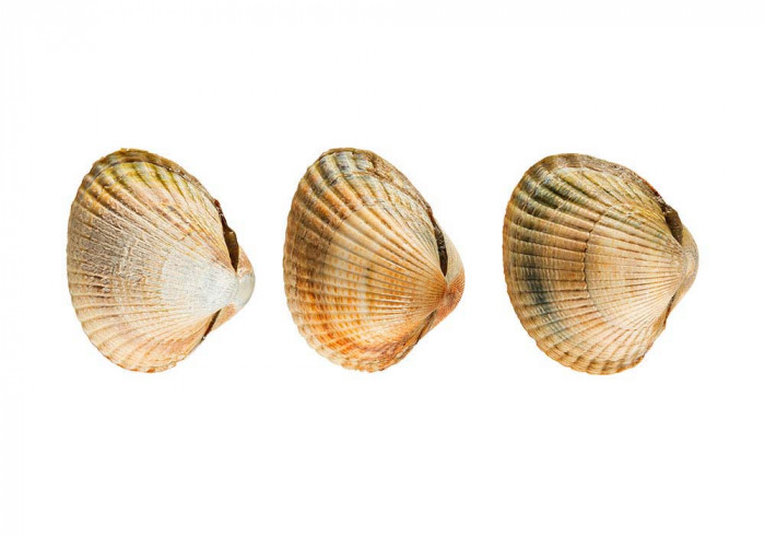 Cockle Coques