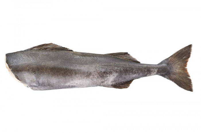 Black Cod Kohlenfisch 4/5 lb