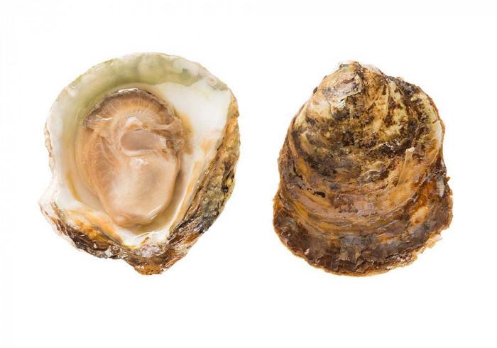 Belon oysters size 00